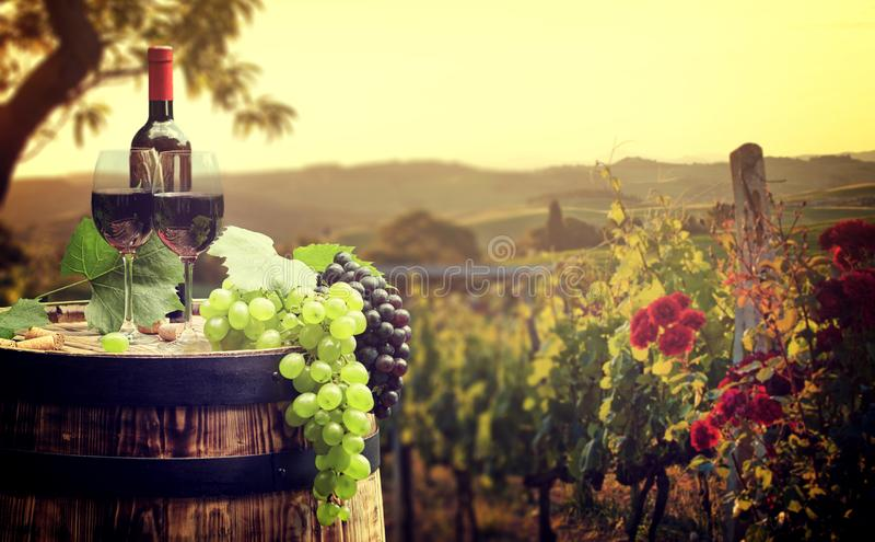 Vinho tinto com o tambor no vinhedo em Toscânia verde, Itália foto de stock royalty free