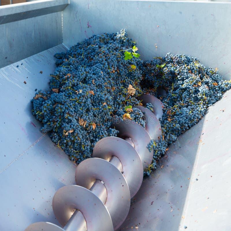 Vinification de destemmer de broyeur de tire-bouchon avec des raisins photo libre de droits