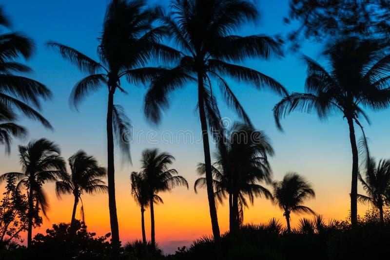 Vinkande palmträd på solnedgången i fortet Myers Beach Florida USA royaltyfria bilder