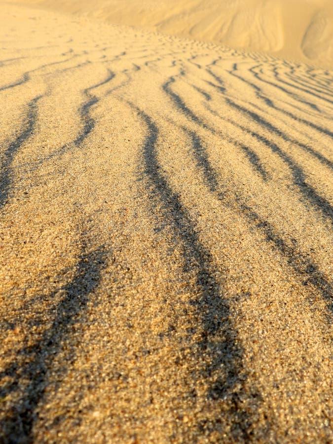 Vinkar av sanden arkivfoto