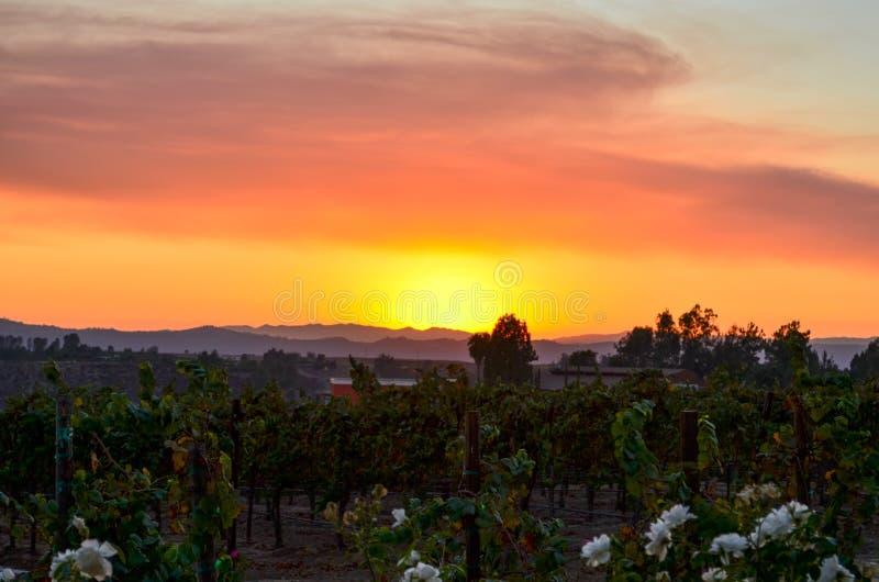 Vinland Temecula sydliga Kalifornien arkivbild