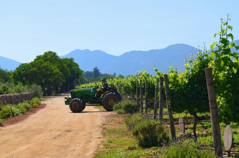 Vinlantgård, Chile arkivbild
