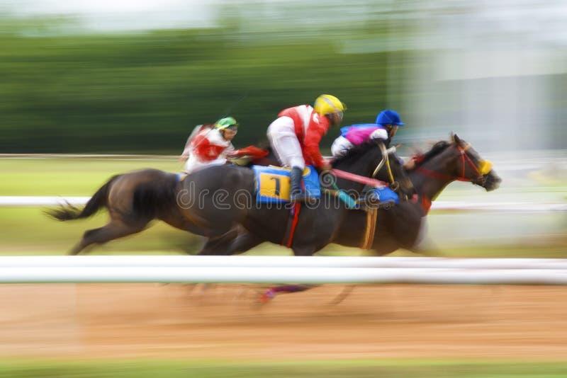 Vinnare av hästkapplöpning royaltyfri fotografi