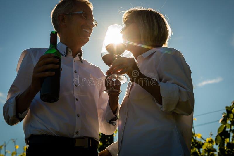 Vino de consumición mayor de la mujer y del hombre en viñedo fotos de archivo