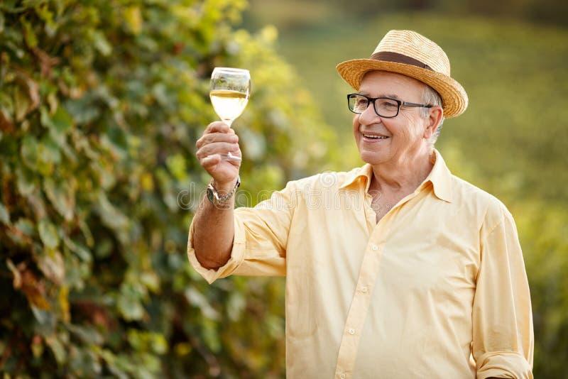 Vino de la prueba del viticultor en viñedo imagen de archivo