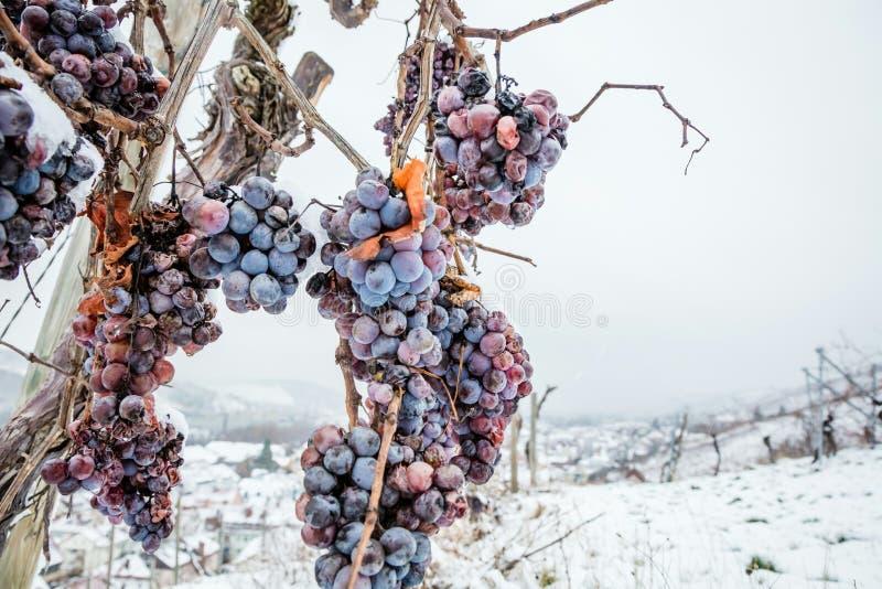 Vino del hielo Uvas rojas de vino para el vino del hielo en la condición y la nieve del invierno fotos de archivo libres de regalías