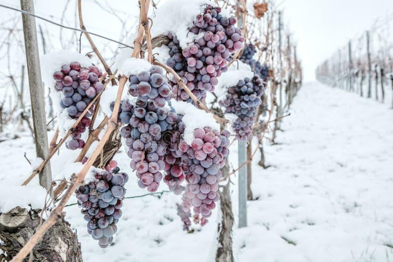 Vino del hielo Uvas rojas de vino para el vino del hielo en la condición y la nieve del invierno fotos de archivo