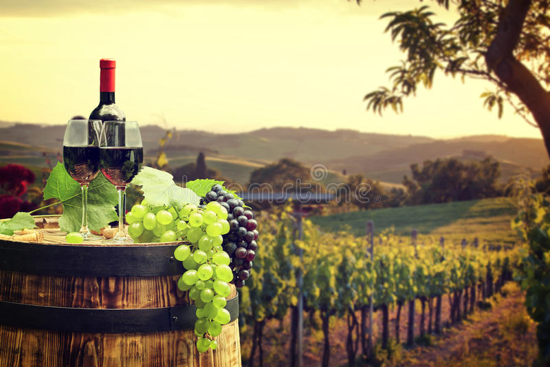 Vino rojo con el barril en viñedo en Toscana verde imagenes de archivo