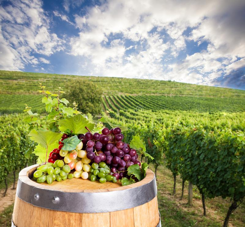 Vino rojo con el barril en viñedo en Toscana verde, Italia foto de archivo