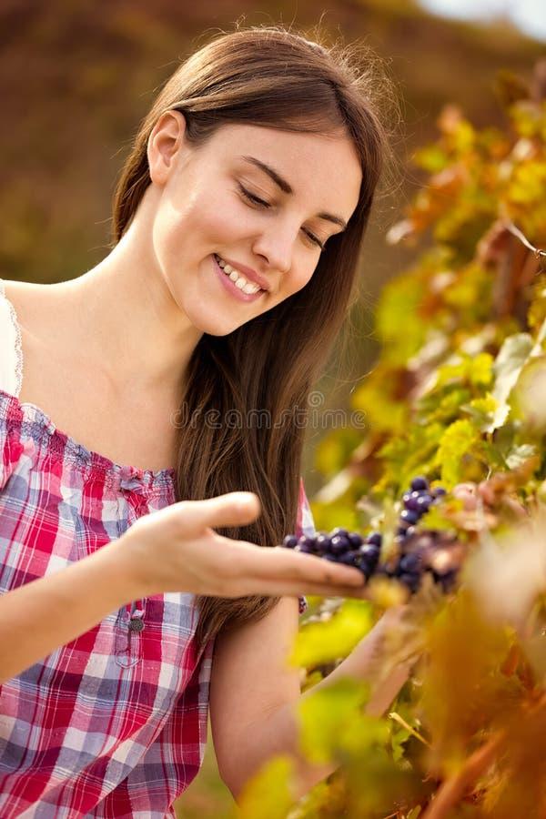 Vinproducent observera druvor royaltyfri foto