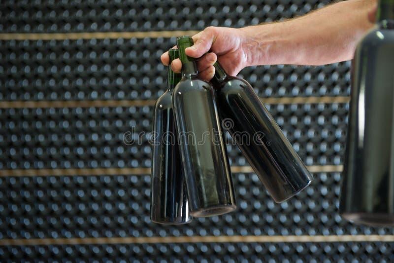 Vinproducenten i källareinnehav i dessa räcker rött vinflaskor royaltyfria foton