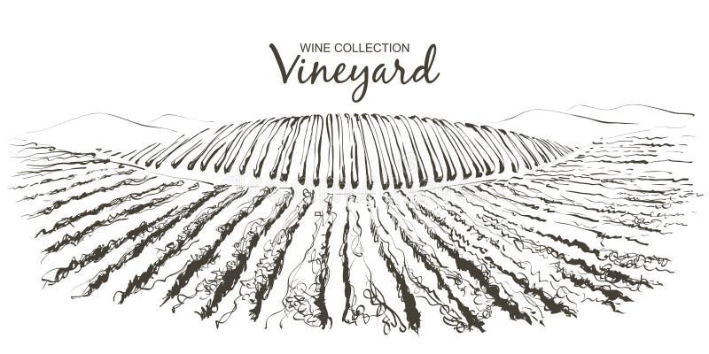 Vinrankakullelandskap Vektorlinjen skissar illustrationen royaltyfri fotografi