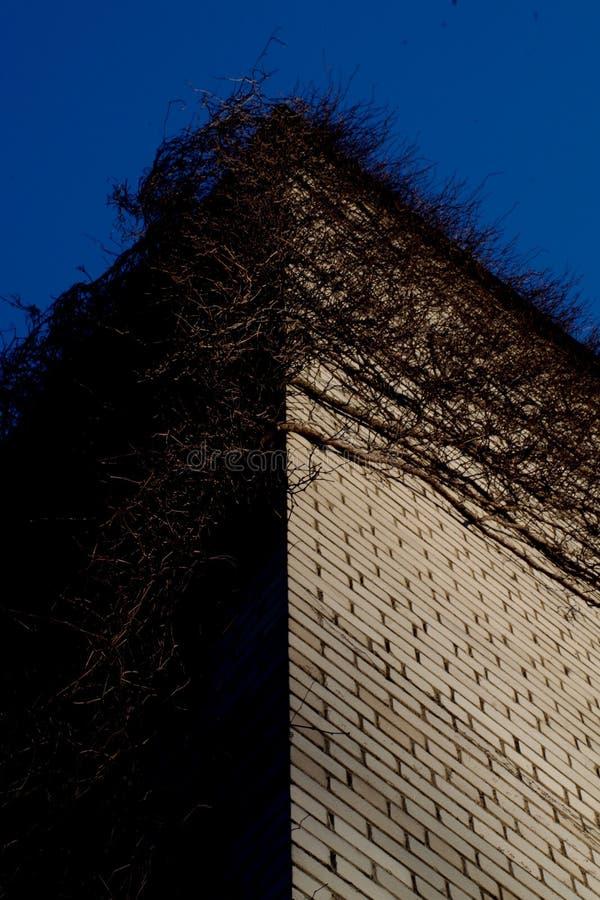 Vinrankor på en byggnad som är symmetrisk arkivfoton