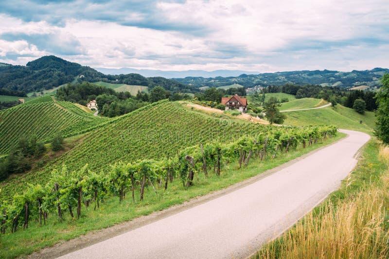 Vinslinga i sydliga Styria royaltyfri foto