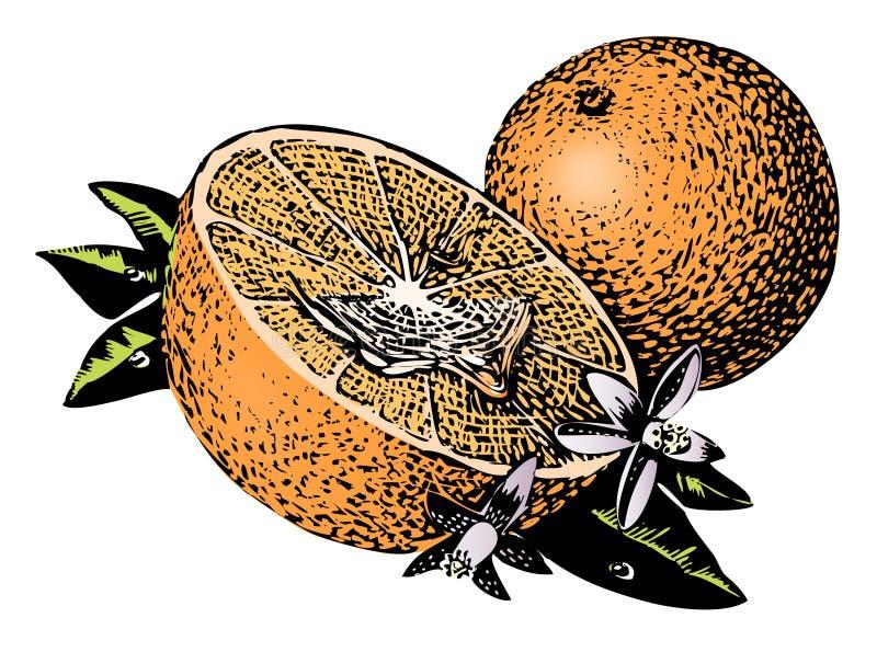 Vintage 1950s Oranges royalty free illustration