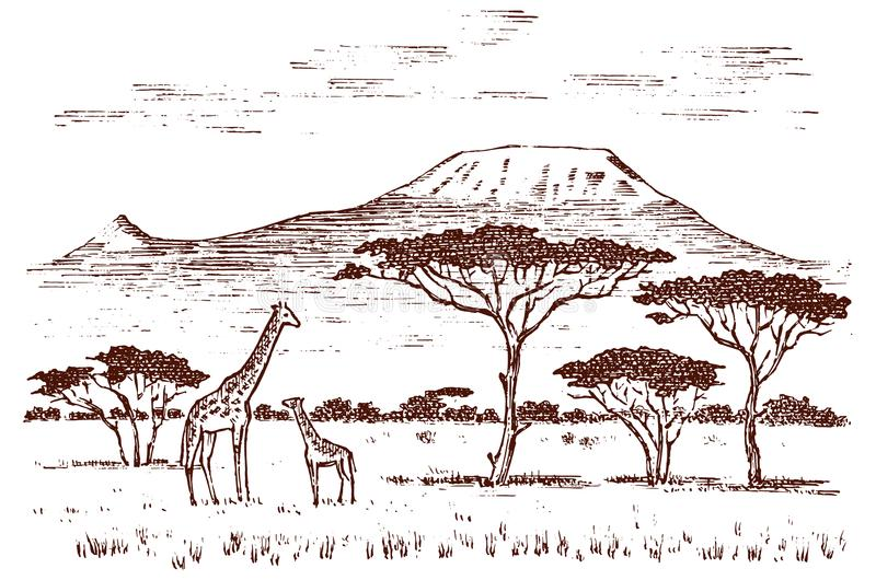 Vintage African landscape. Safaris and wild giraffes. Kilimanjaro mountain in Savannah. Animals engraved hand drawn old royalty free illustration