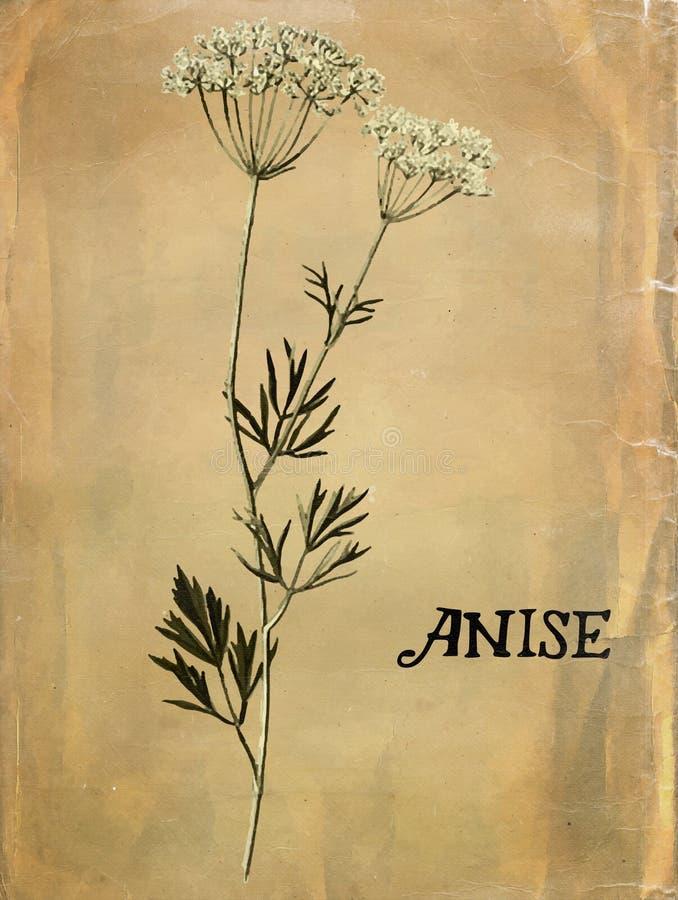 Vintage Anise Plant preto e branco imagens de stock
