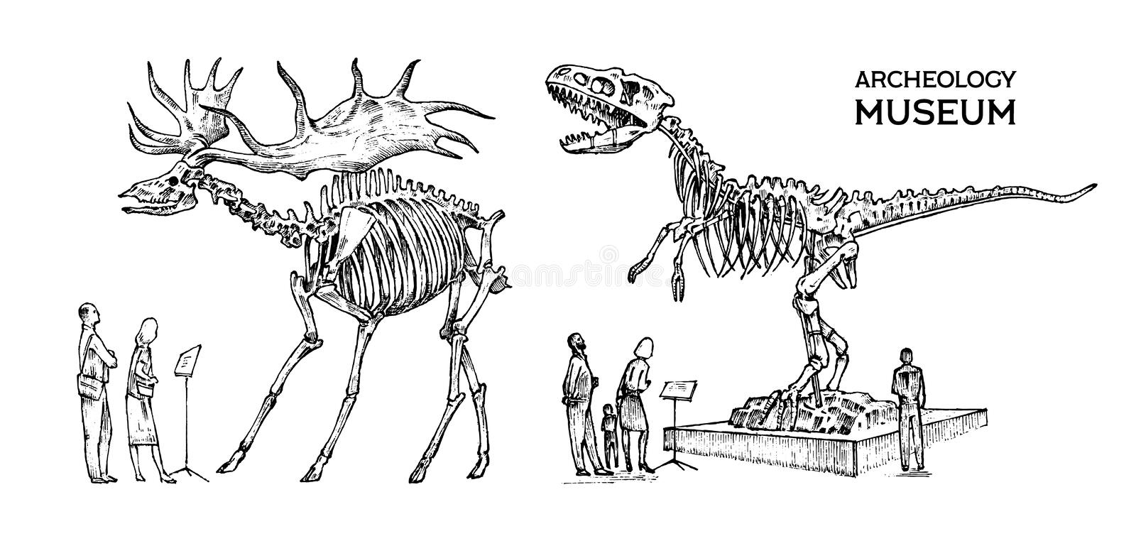 Vintage Archaeological Museum. Visitors are looking at the exhibit. Historical skeleton of an extinct animal dinosaur vector illustration