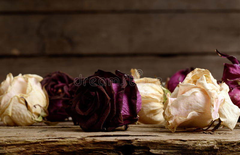 Vintage background with dark red and white dried roses on a old wooden surface. royalty free stock photo