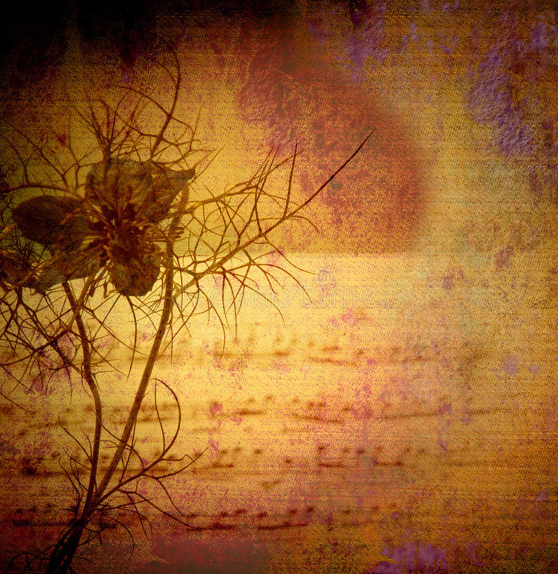 Vintage background, flower and score royalty free stock photos
