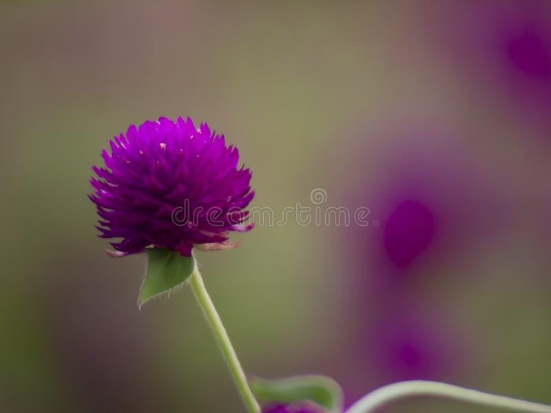 Vintage background little flowers, nature beautiful, toning design spring nature royalty free stock image