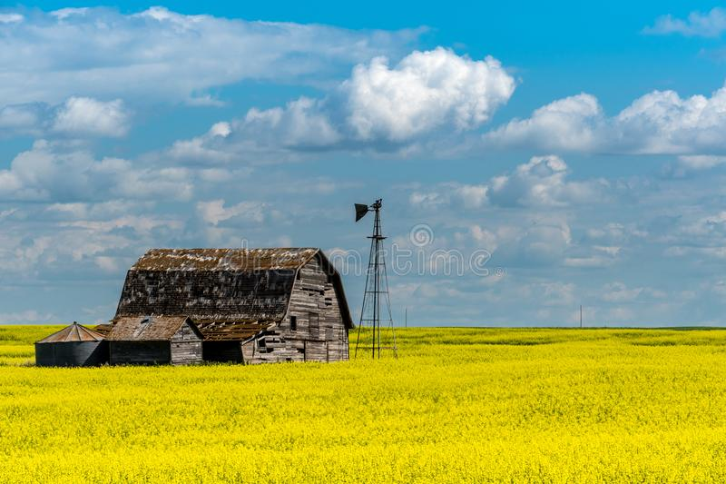 Vintage barn, bins and windmill in a swathed canola field under ominous dark skies. In Saskatchewan, Canada royalty free stock photography