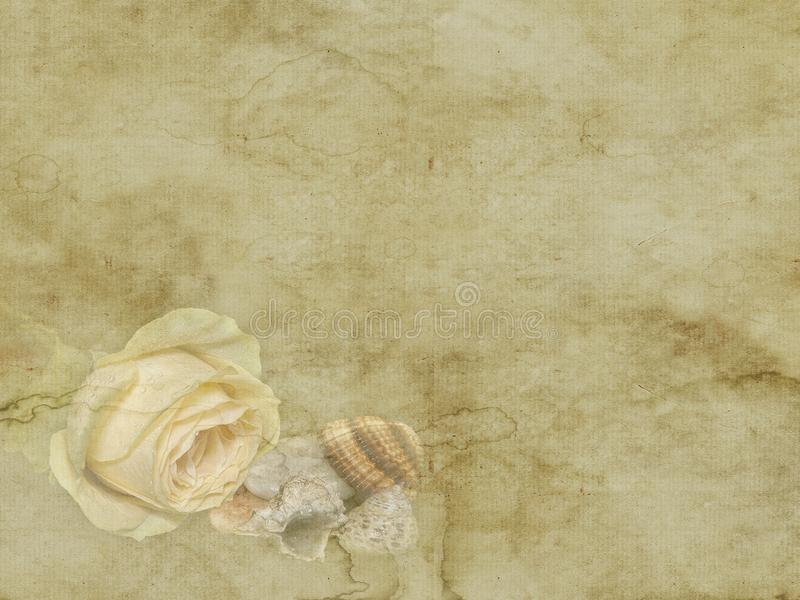 Vintage beautiful yellow rose with sea shells holiday card on old paper background royalty free stock photo