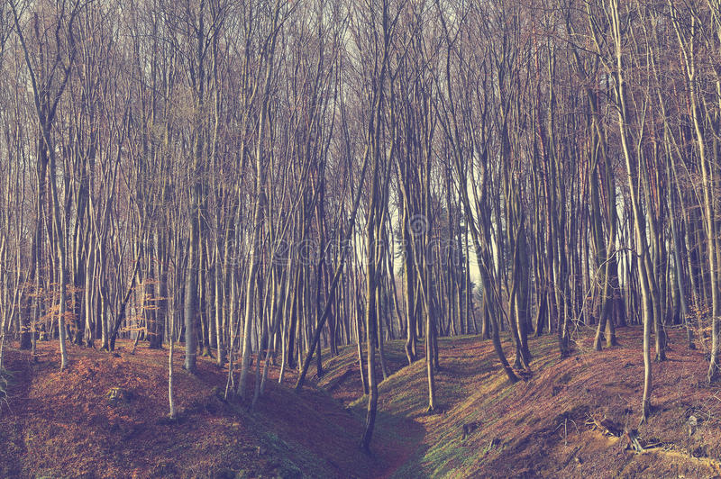 Vintage beauty forest with sunrays in the morning stock images