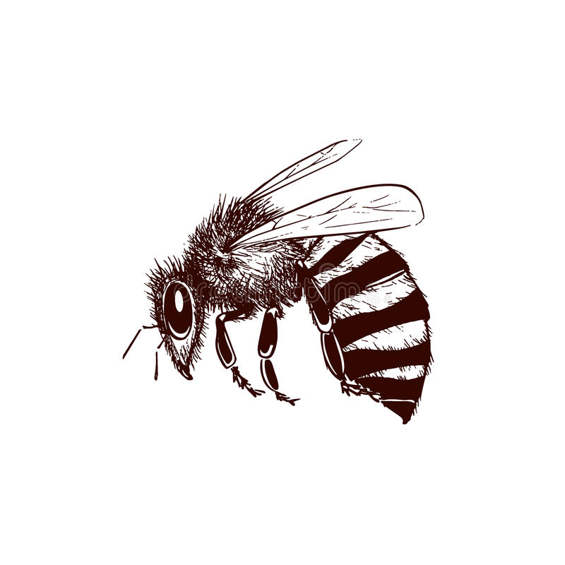 Download Vintage bee illustration stock vector. Image of summer - 83704377