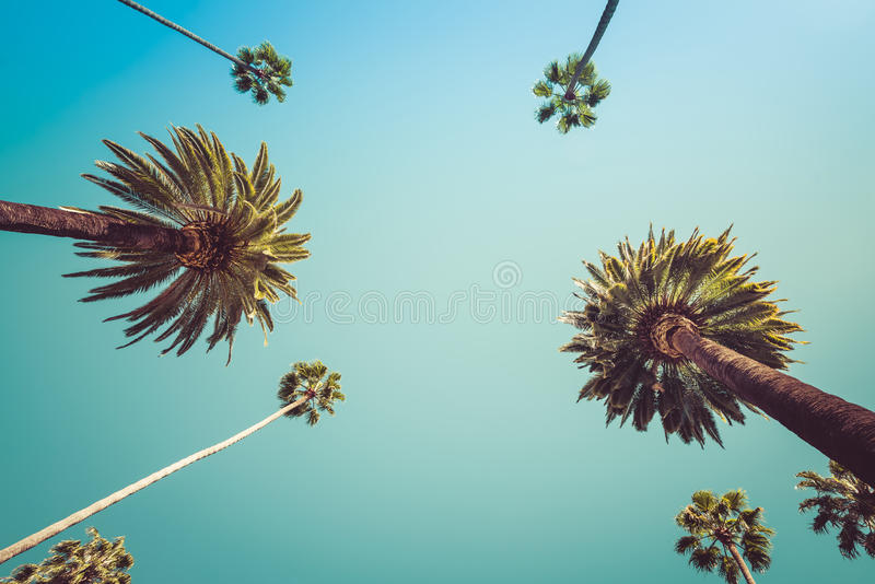 Vintage Beverly Hills Los Angeles Palm Trees stock photos