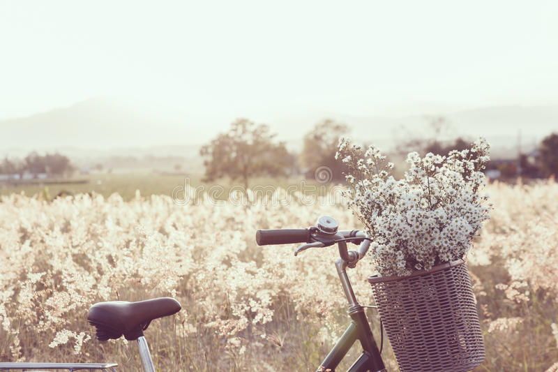 Vintage bicycle with basket full of grass in the field stock photography