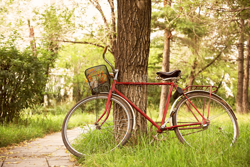 Vintage bicycle near tree royalty free stock photography