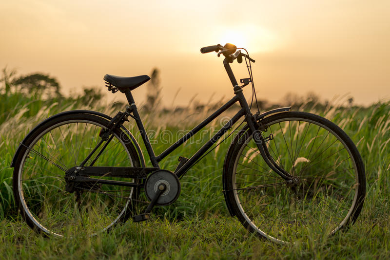 Vintage Bicycle at Sunset. Beautiful Green Grass Wild Flowers and Vintage Bicycle at Sunset royalty free stock photo