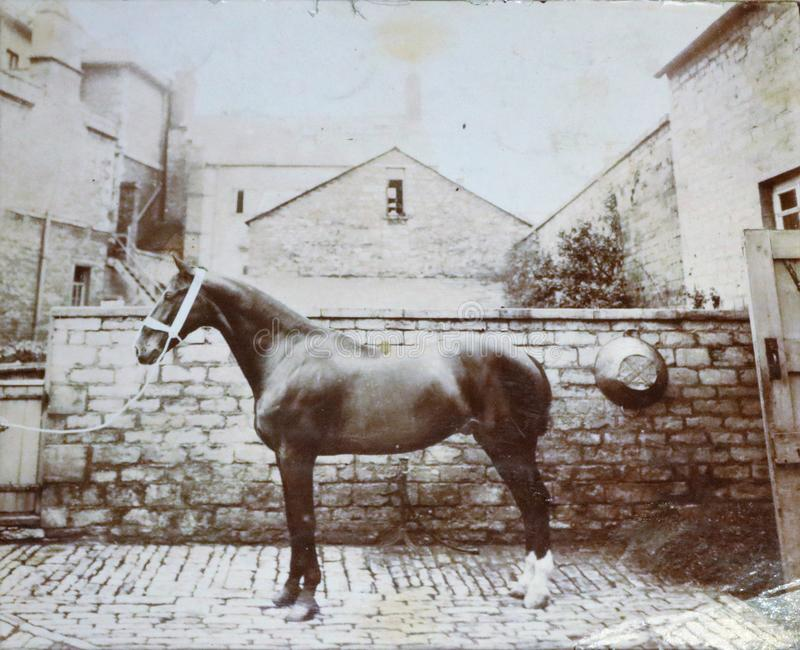 Vintage black and white photo showing horse in back yard - Victorian? stock photo