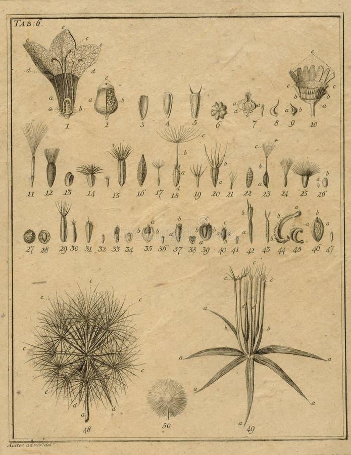 Vintage Botany Field Notes - Botany Illustration - Vintage Floral Illustrations - Scrapbook Papercrafting royalty free illustration