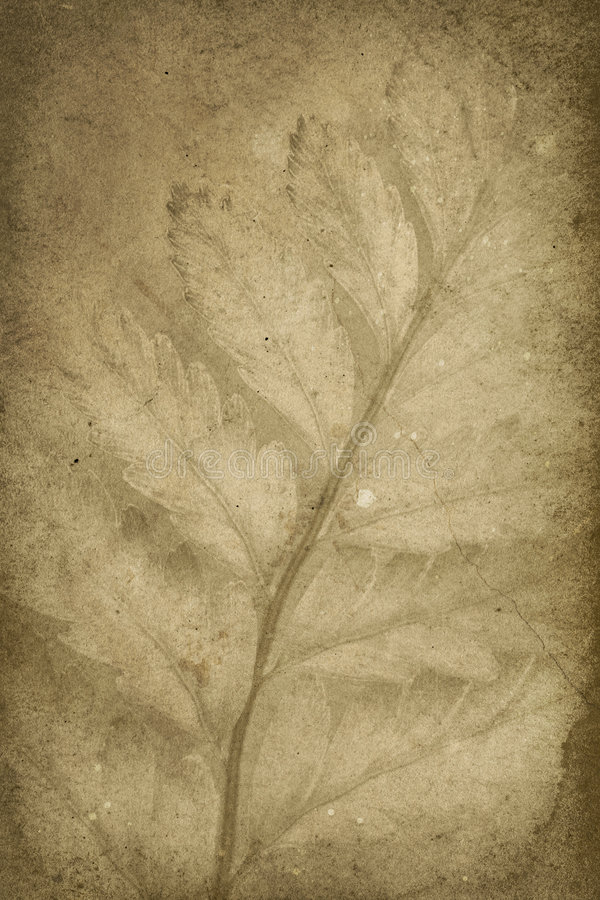 Download Vintage Branch Imprint Background Stock Image - Image: 7839637