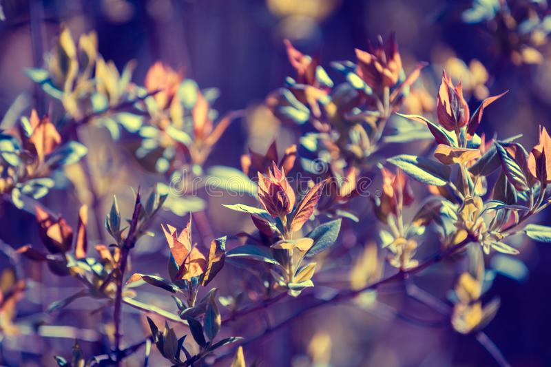 Vintage branches with young leaves stock photography