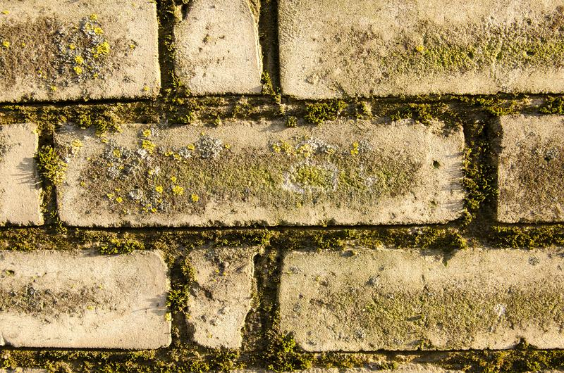 vintage brick wall with moss. close-up royalty free stock images
