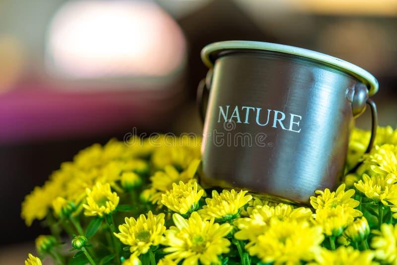 Vintage Bucket On Yellow Flowers. Vintage Brown Metal Bucket On Fresh Vivid Yellow Flowers Blossom stock photo
