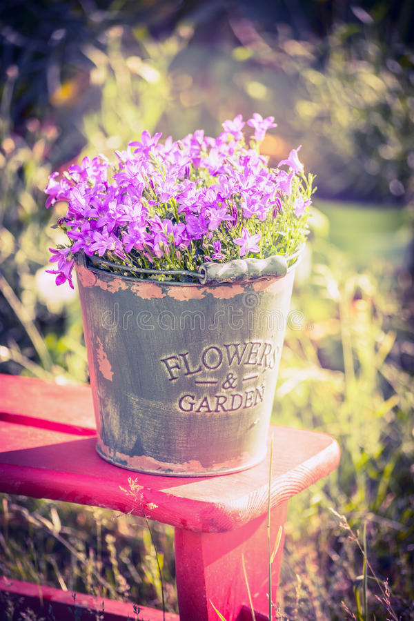 Vintage bucket with campanula flowers on garden background. Outdoor royalty free stock photography