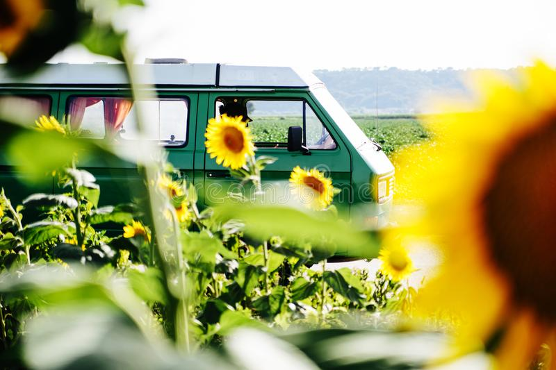 A camper van in a sunflower field royalty free stock photography
