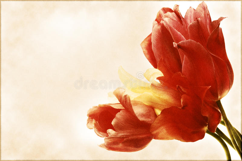 Download Vintage Card With A Bouquet Of Tulips Stock Photo - Image: 20054216