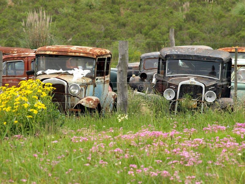 Vintage cars abandoned royalty free stock image