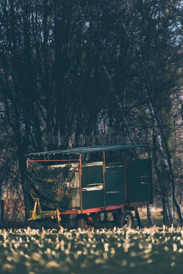 Vintage cattle truck parked at edge of field. Vintage cattle truck parked at edge of field used as deer watching post. Lit by low winter sunlight royalty free stock photography
