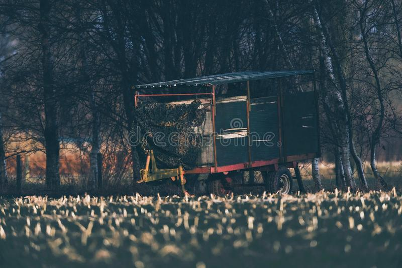 Vintage cattle truck parked at edge of field. Vintage cattle truck parked at edge of field used as deer watching post. Lit by low winter sunlight royalty free stock image