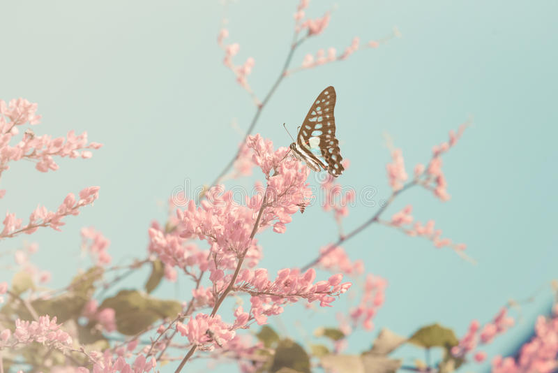 Vintage Cherry blossom and butterfly. royalty free stock image