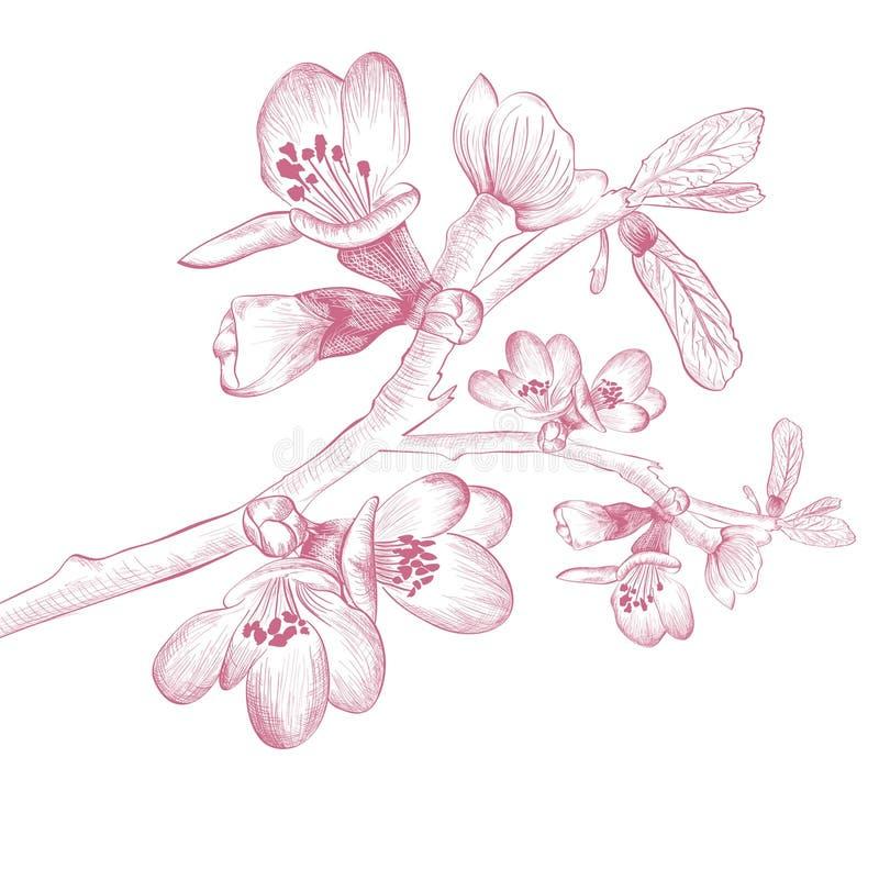 Vintage Cherry Blossom Flower libre illustration