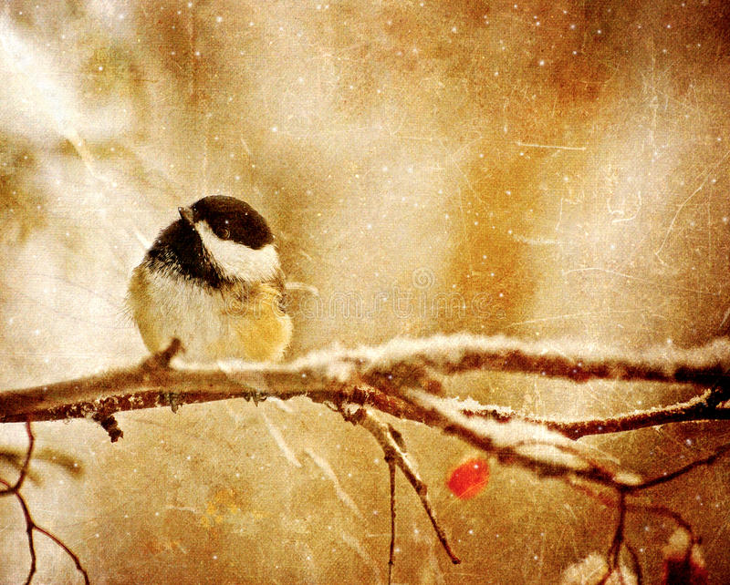 Vintage Christmas card. Vintage Christmas card with an adorable chickadee in the snow with copy space royalty free illustration