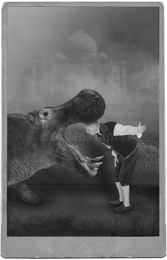 Vintage Circus Performer, Carnival, Hippo, Hippopotamus. Photograph portrait of a vintage circus or carnival performer posing with a hippo or hippopotamus. The stock images