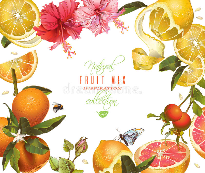 Vintage citrus frame. Vector citrus mix banner with hibiscus flowers and rose hip. Design for tea, ice cream, natural cosmetics, sweets and pastries filled with vector illustration